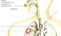 Профилактика и лечение легочных заболеваний