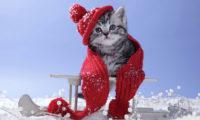 Домашние животные зимой